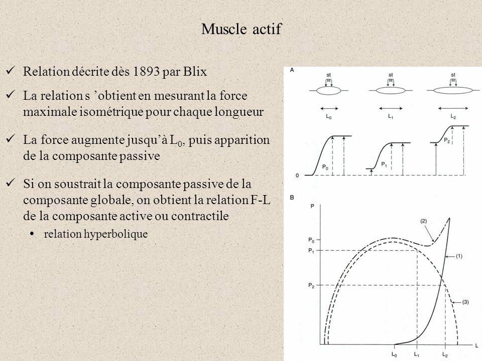 Muscle actif Relation décrite dès 1893 par Blix