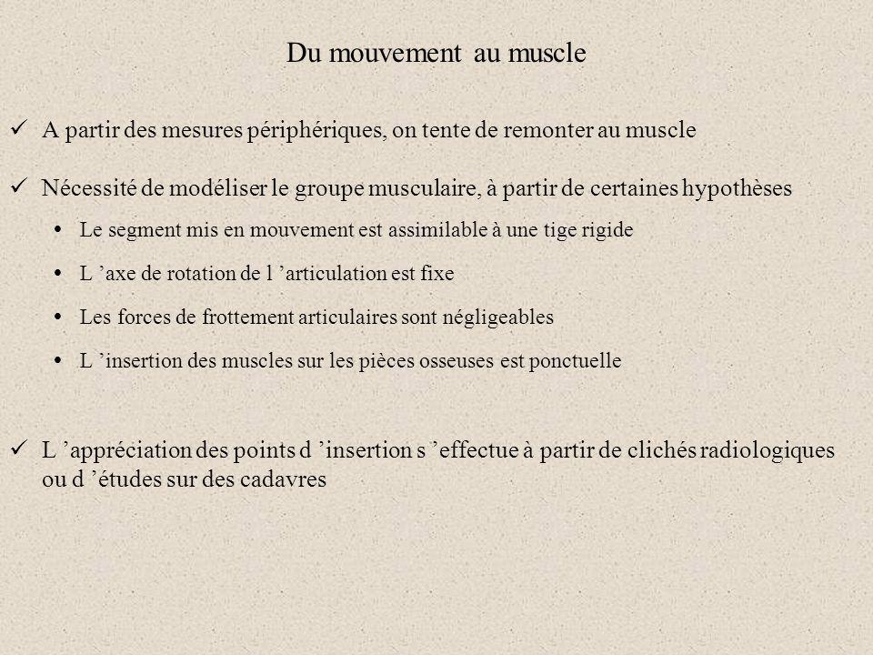 Du mouvement au muscle A partir des mesures périphériques, on tente de remonter au muscle.