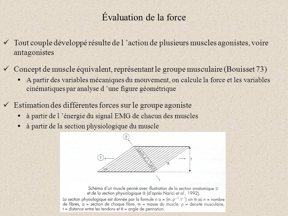 Évaluation de la force Tout couple développé résulte de l 'action de plusieurs muscles agonistes, voire antagonistes.