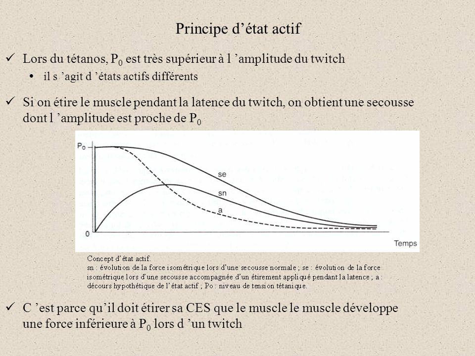 Principe d'état actif Lors du tétanos, P0 est très supérieur à l 'amplitude du twitch. il s 'agit d 'états actifs différents.