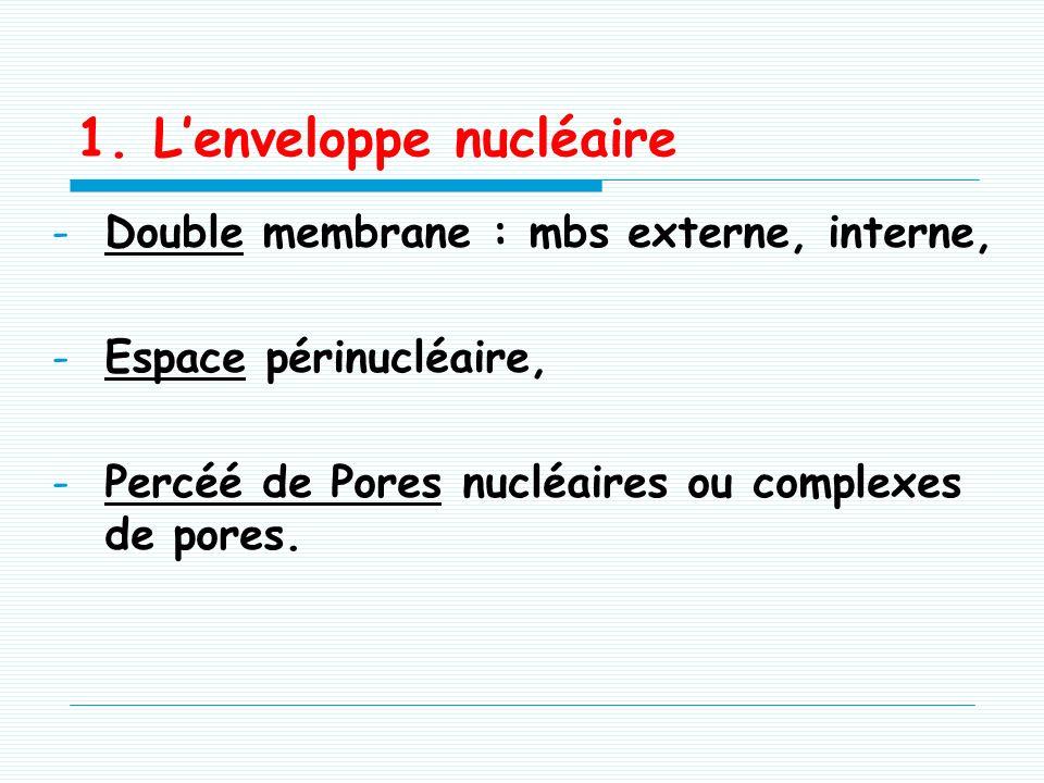 1. L'enveloppe nucléaire
