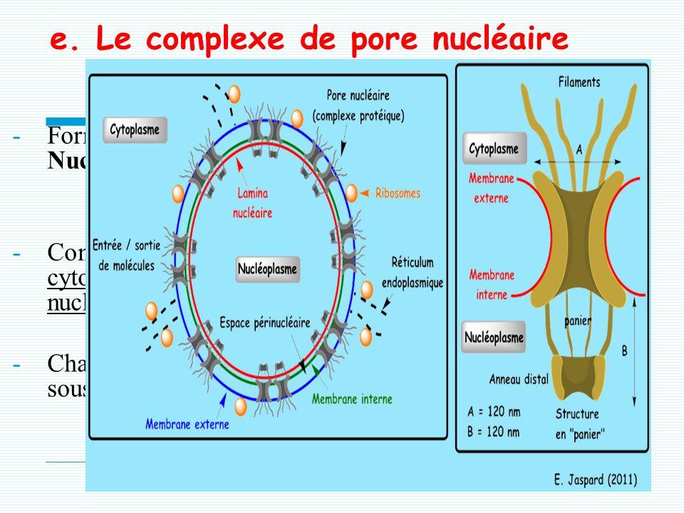 e. Le complexe de pore nucléaire