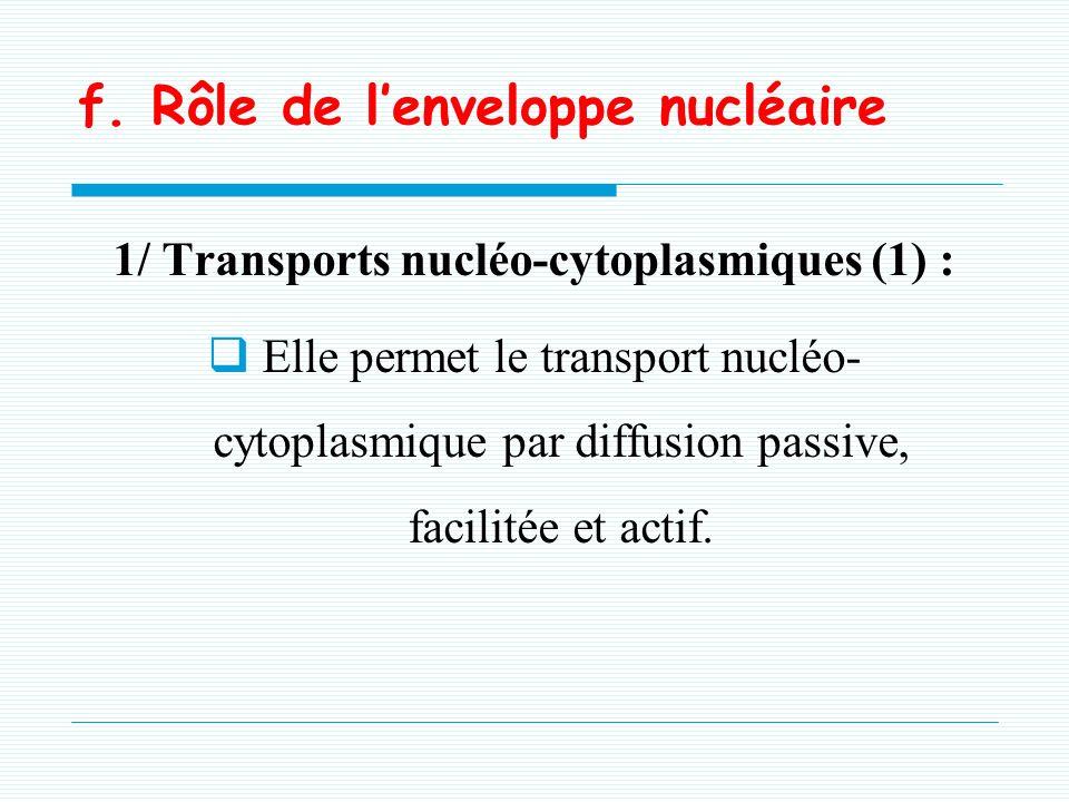 f. Rôle de l'enveloppe nucléaire