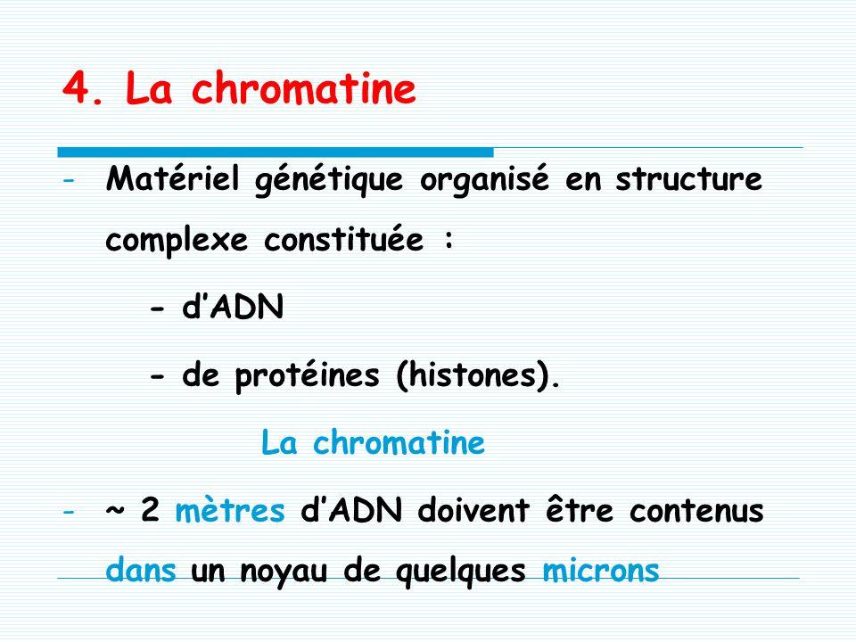 4. La chromatine Matériel génétique organisé en structure complexe constituée : - d'ADN. - de protéines (histones).