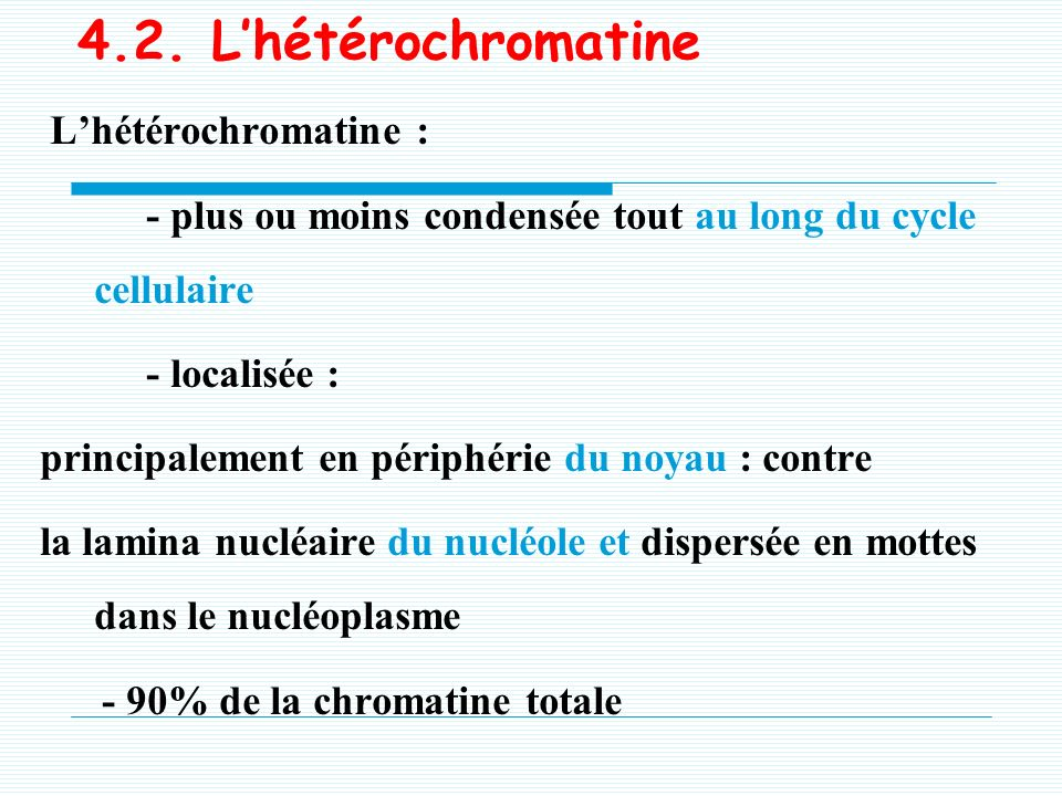 4.2. L'hétérochromatine L'hétérochromatine :