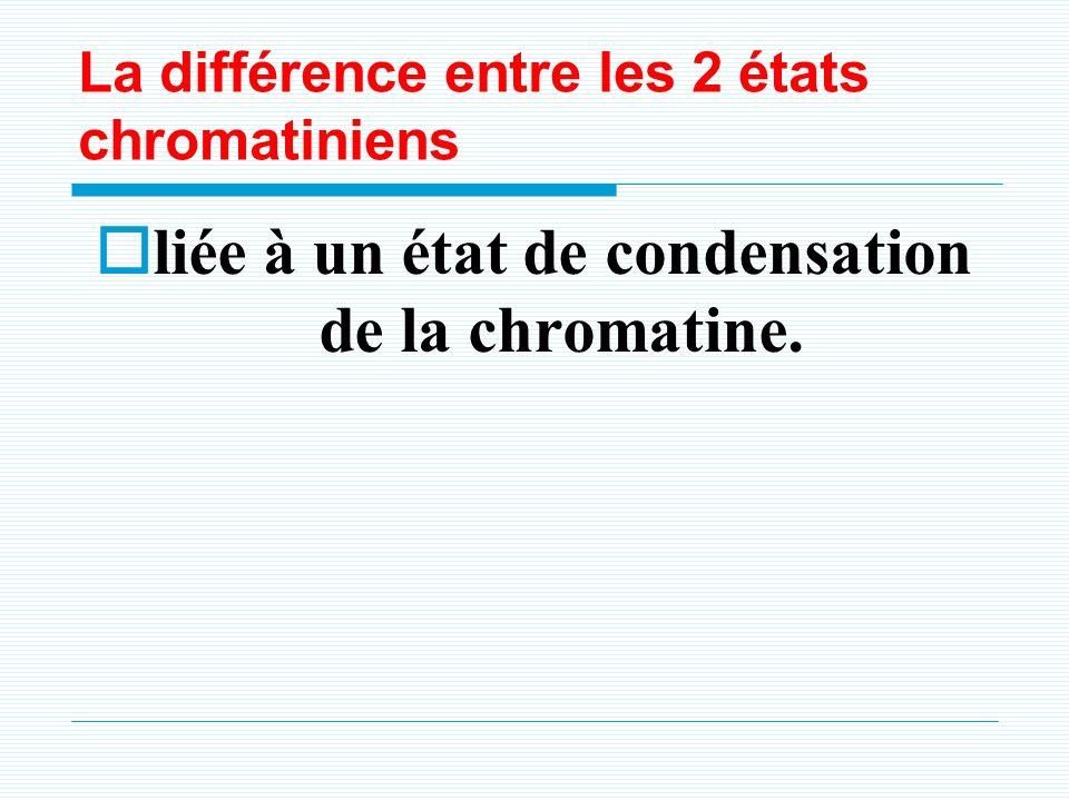 La différence entre les 2 états chromatiniens