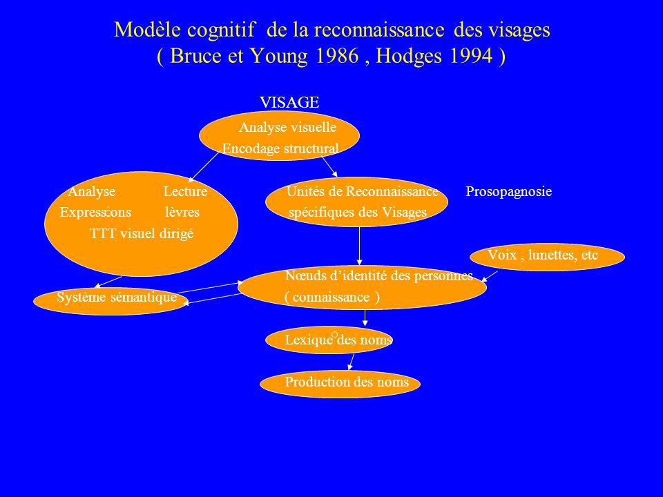 Modèle cognitif de la reconnaissance des visages ( Bruce et Young 1986 , Hodges 1994 )