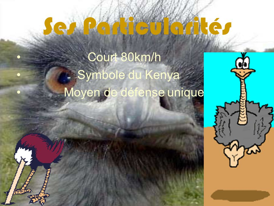 Ses Particularités Court 80km/h Symbole du Kenya