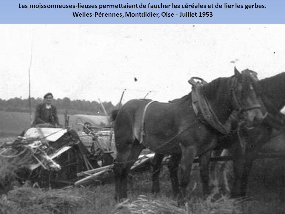 Welles-Pérennes, Montdidier, Oise - Juillet 1953
