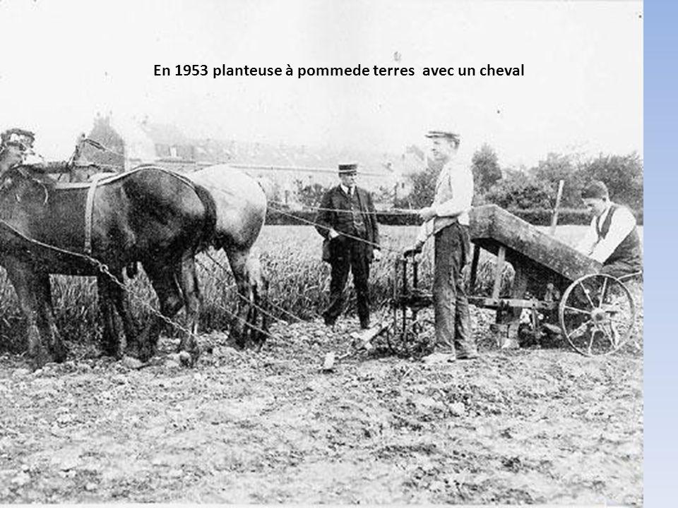 En 1953 planteuse à pommede terres avec un cheval