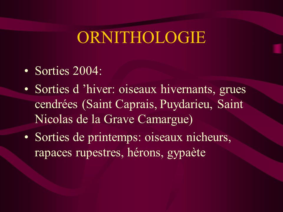 ORNITHOLOGIE Sorties 2004: