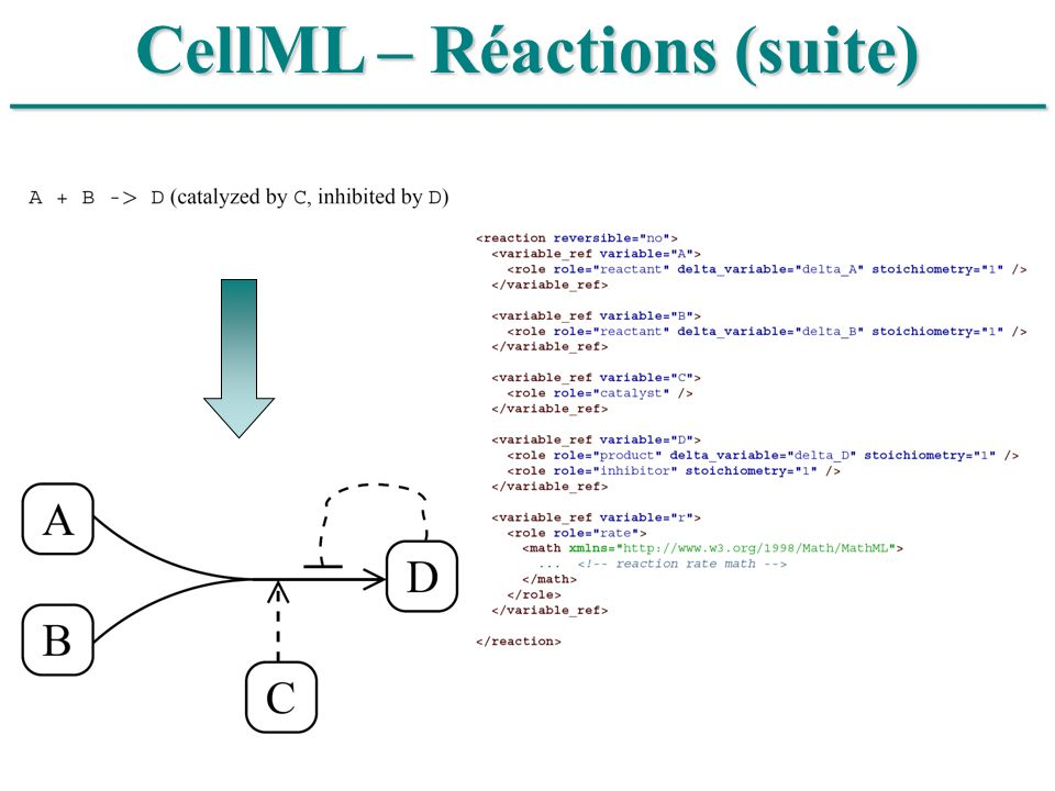 CellML – Réactions (suite)