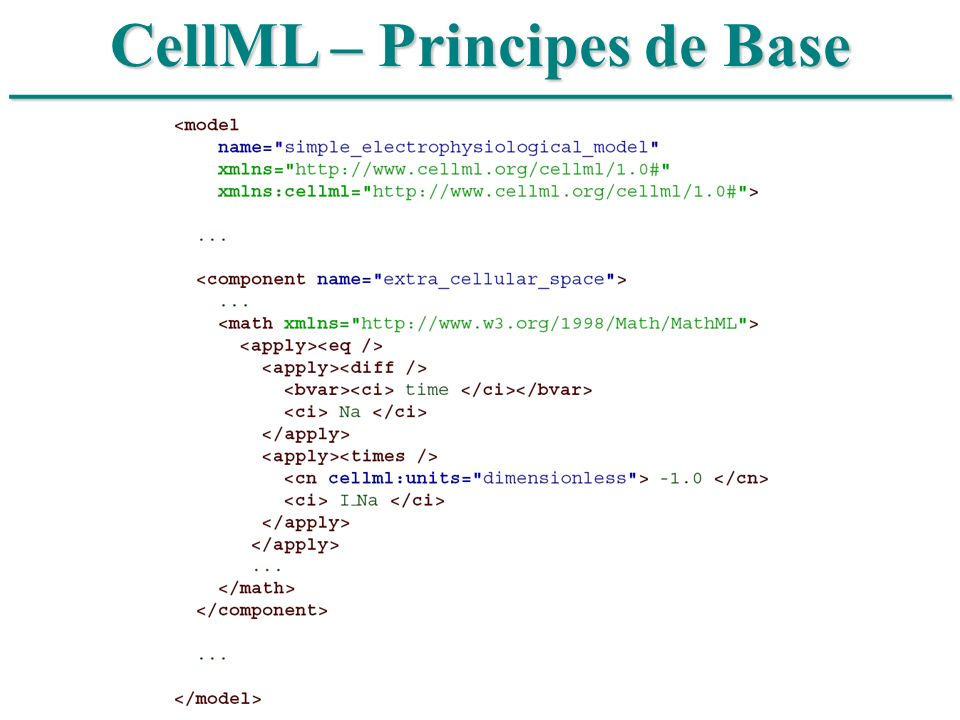 CellML – Principes de Base