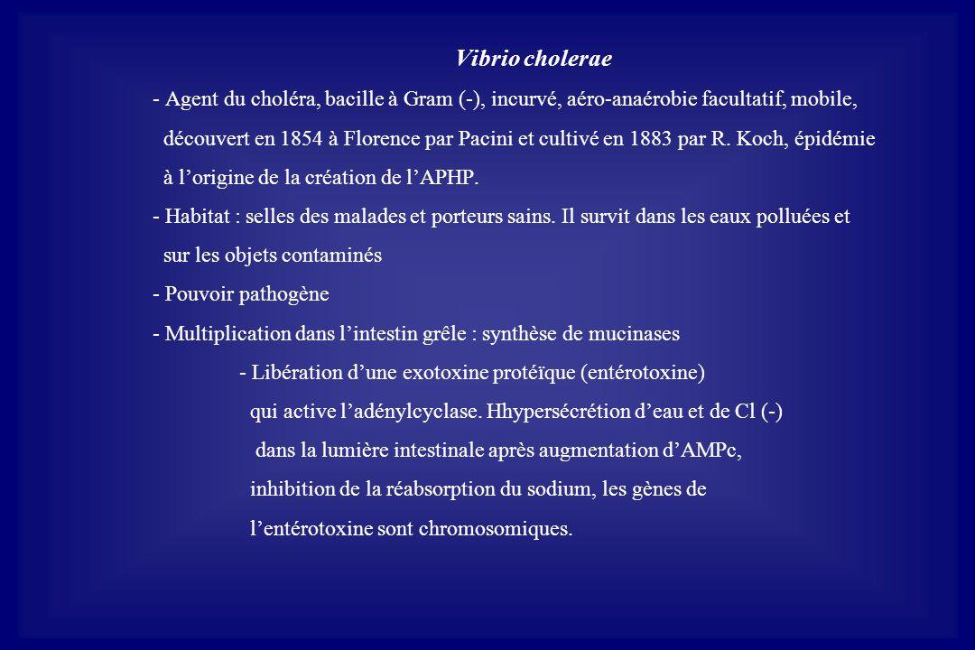 Vibrio cholerae - Agent du choléra, bacille à Gram (-), incurvé, aéro-anaérobie facultatif, mobile,