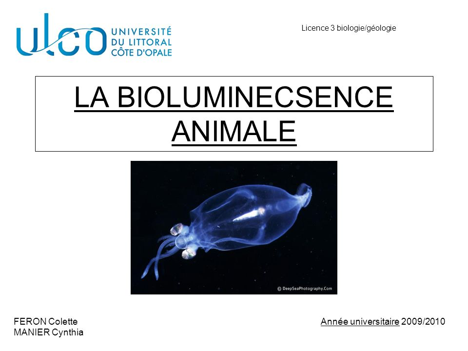LA BIOLUMINECSENCE ANIMALE