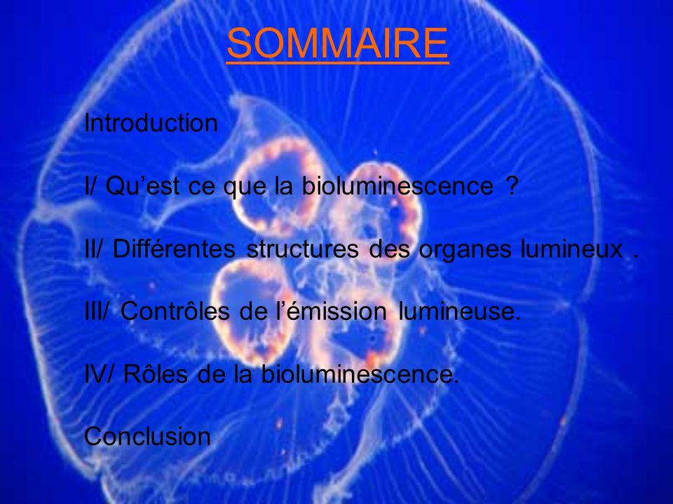 SOMMAIRE Introduction I/ Qu'est ce que la bioluminescence