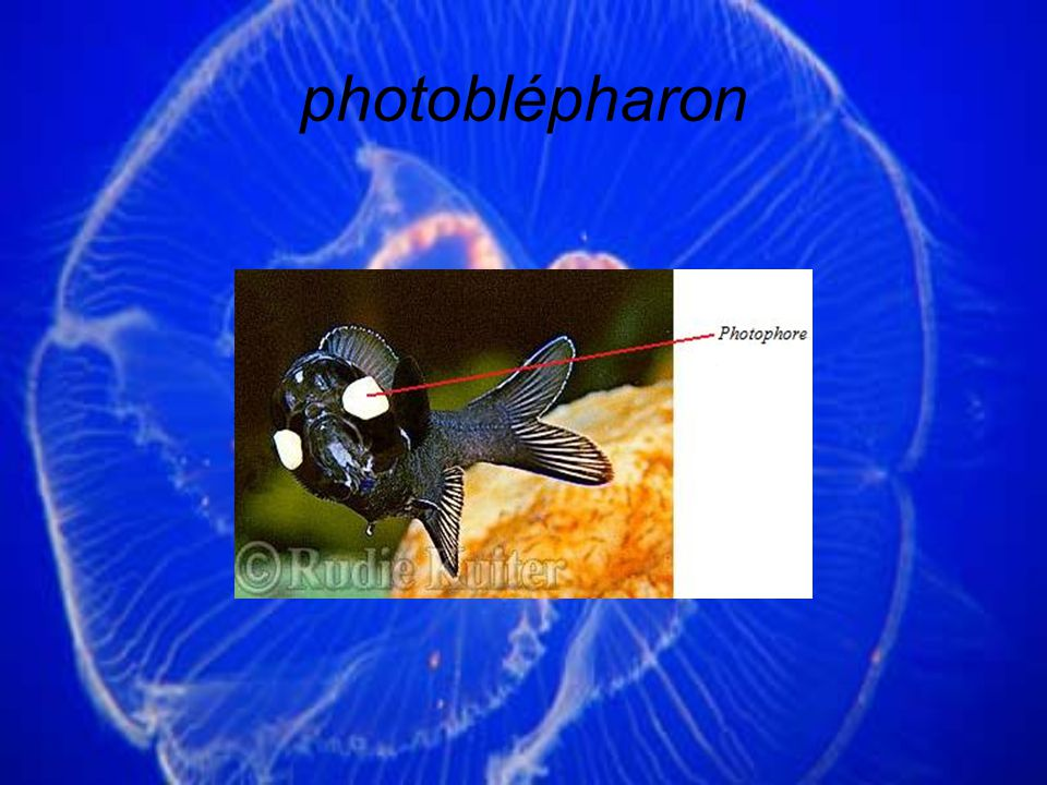 photoblépharon