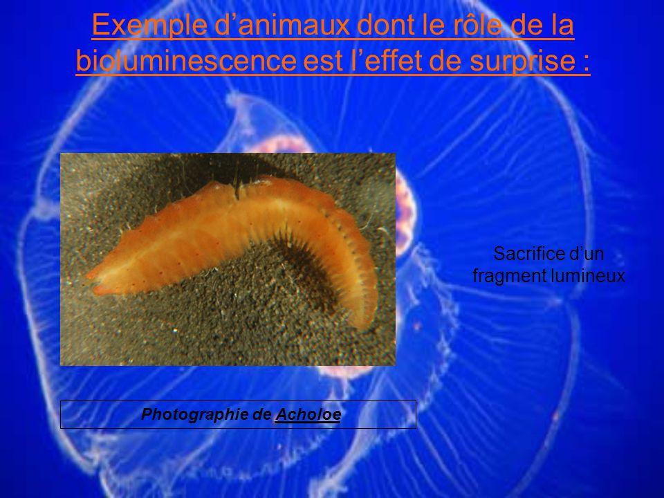 Exemple d'animaux dont le rôle de la bioluminescence est l'effet de surprise :