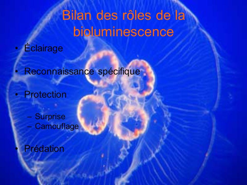 Bilan des rôles de la bioluminescence
