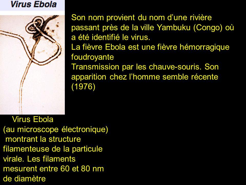 Son nom provient du nom d'une rivière passant près de la ville Yambuku (Congo) où a été identifié le virus.