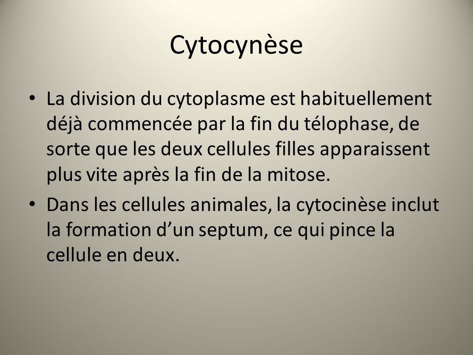 Cytocynèse