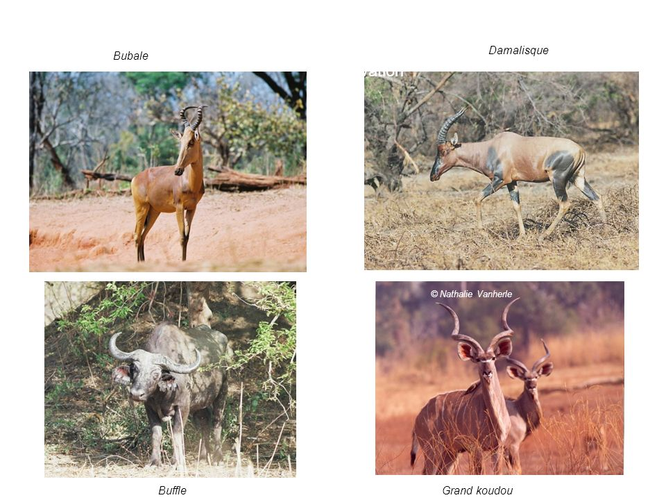 4. Les enjeux: valeur pour la conservation