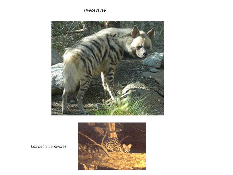 4. Les enjeux: valeur pour la conservation: suite