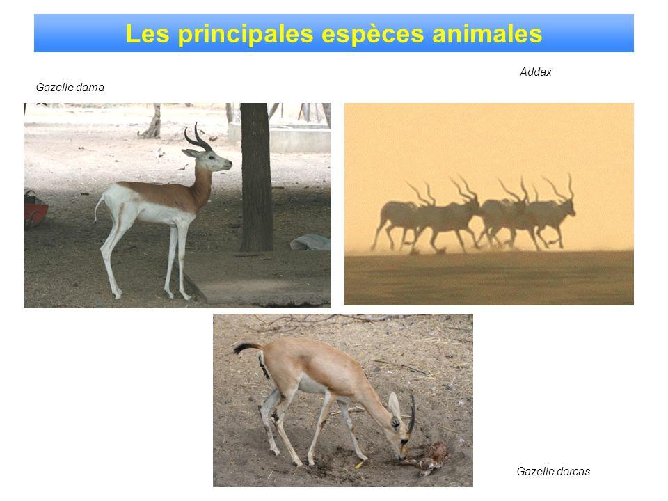 Les principales espèces animales
