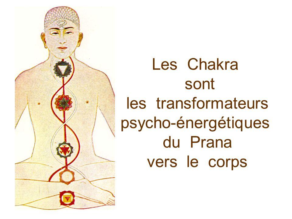 Les Chakra sont les transformateurs psycho-énergétiques du Prana vers le corps