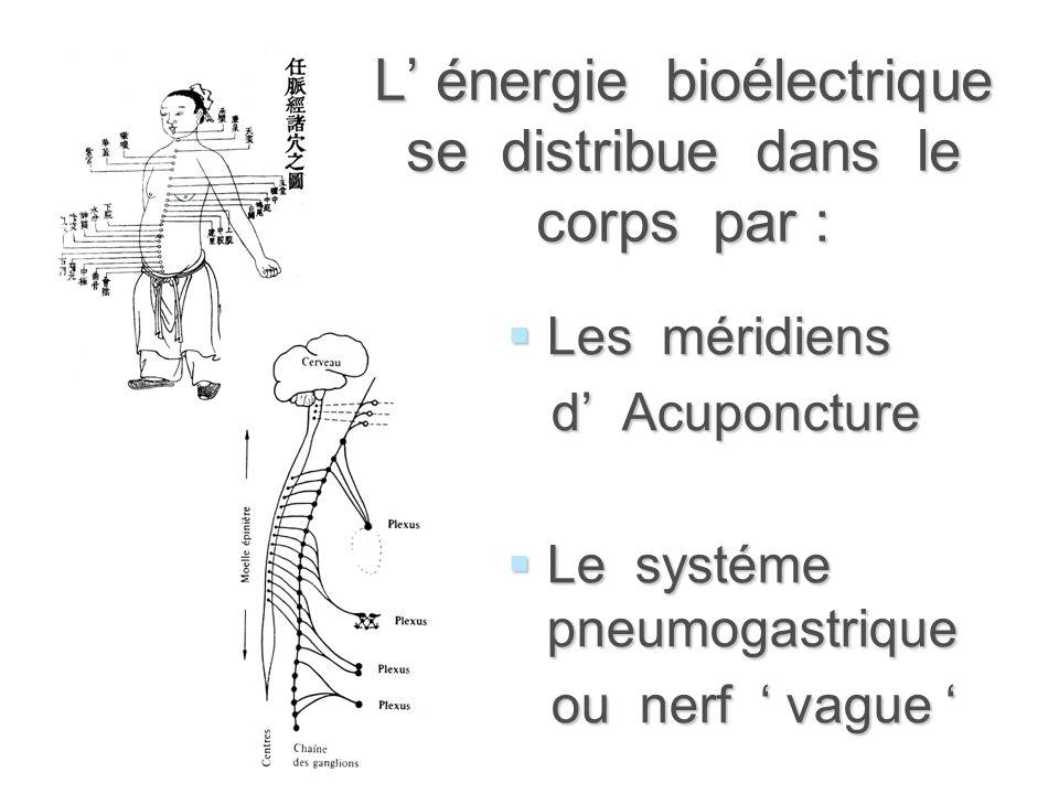 L' énergie bioélectrique se distribue dans le corps par :