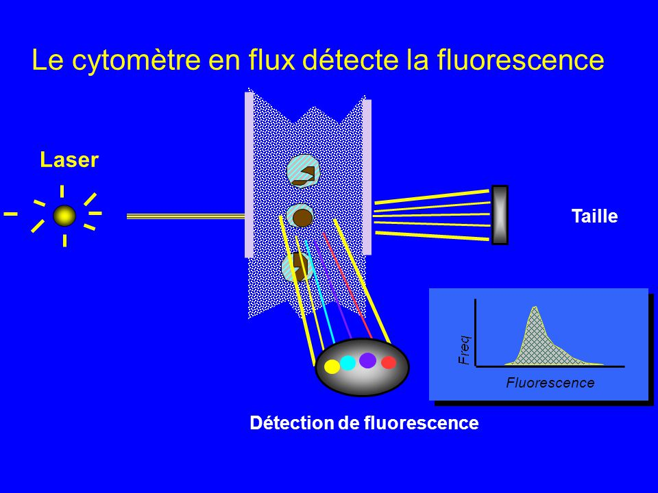 Détection de fluorescence