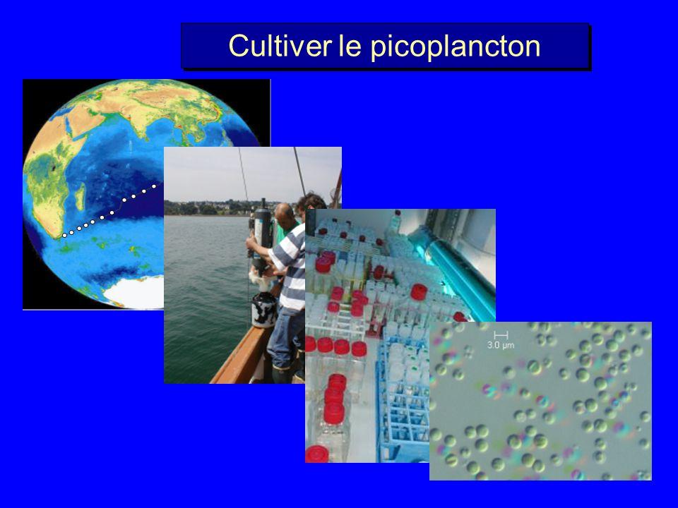 Cultiver le picoplancton
