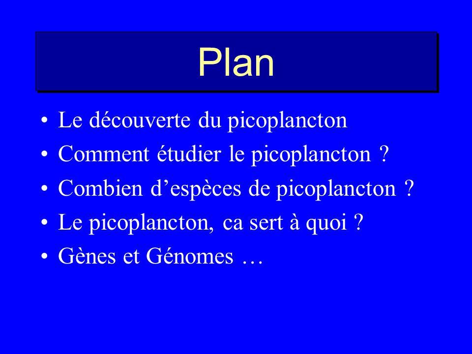 Plan Le découverte du picoplancton Comment étudier le picoplancton