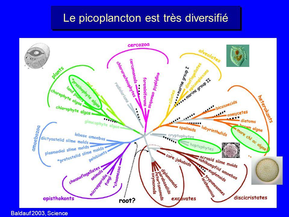Le picoplancton est très diversifié