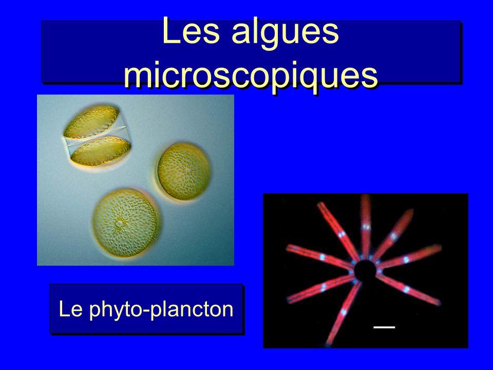 Les algues microscopiques