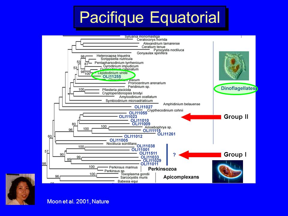 Pacifique Equatorial Group II Group I Moon et al. 2001, Nature