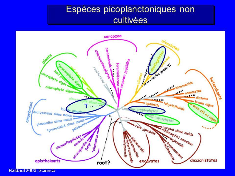 Espèces picoplanctoniques non cultivées