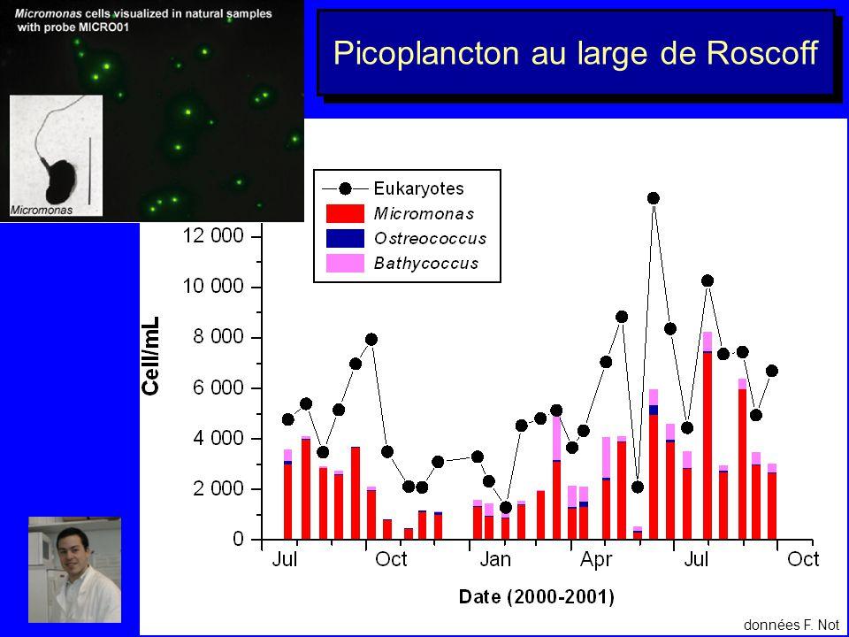 Picoplancton au large de Roscoff
