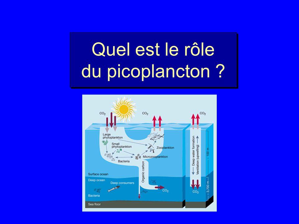 Quel est le rôle du picoplancton