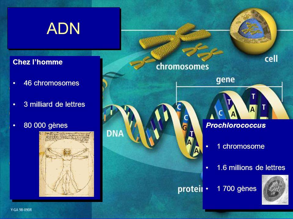 ADN Chez l'homme 46 chromosomes 3 milliard de lettres 80 000 gènes