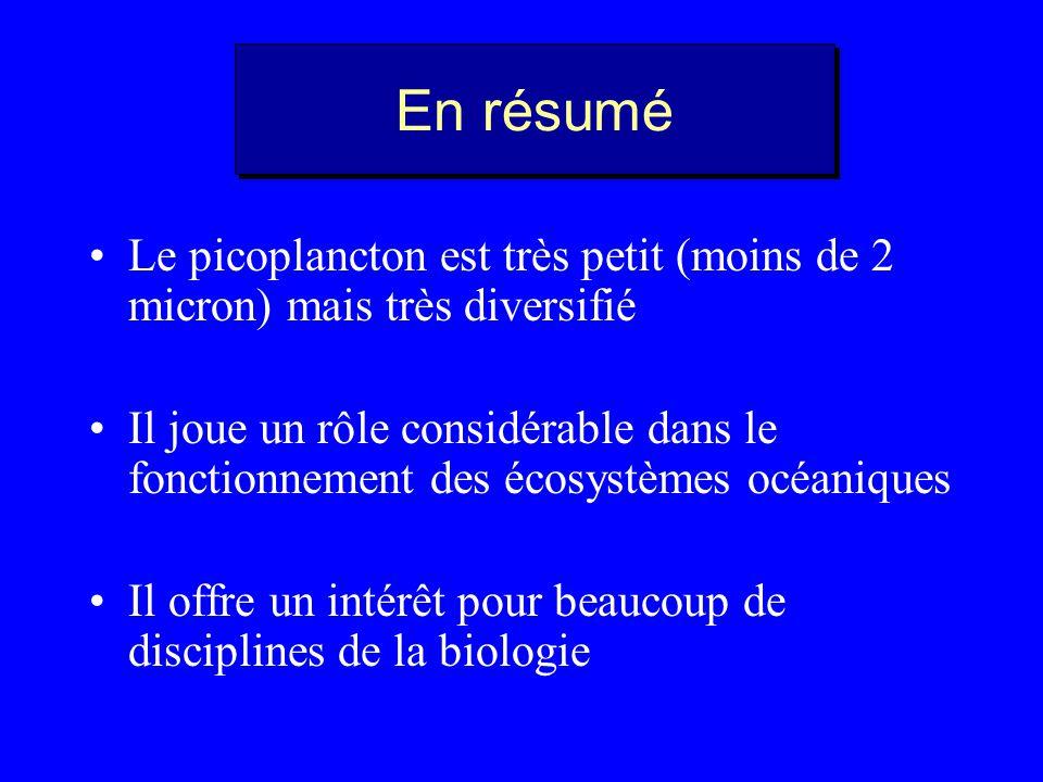 En résumé Le picoplancton est très petit (moins de 2 micron) mais très diversifié.