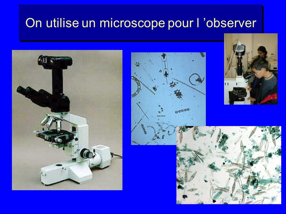 On utilise un microscope pour l 'observer