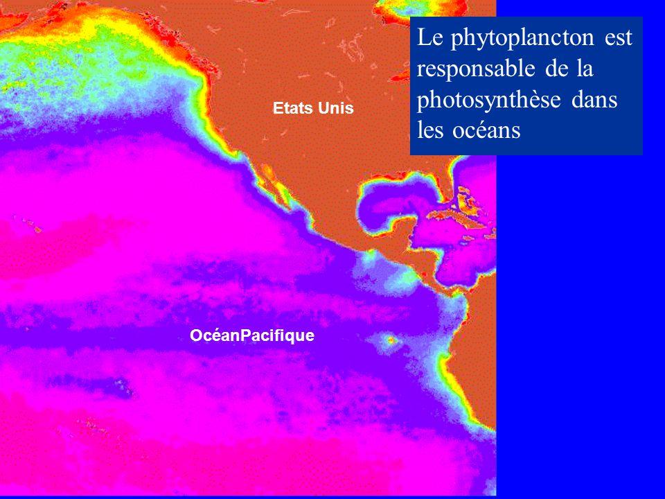 Le phytoplancton est responsable de la photosynthèse dans les océans
