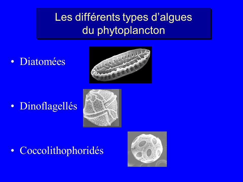 Les différents types d'algues du phytoplancton
