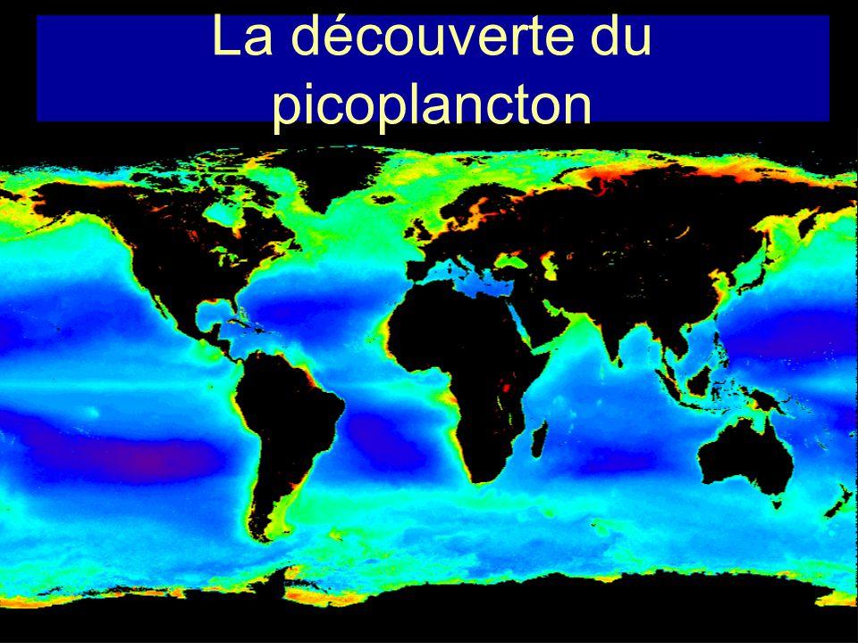 La découverte du picoplancton