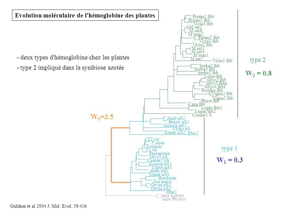 Evolution moléculaire de l hémoglobine des plantes