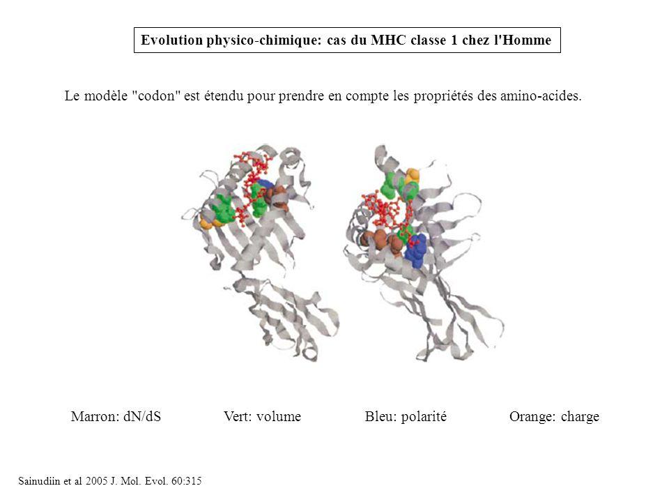 Evolution physico-chimique: cas du MHC classe 1 chez l Homme