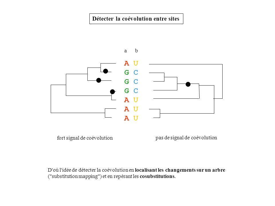 A U G C Détecter la coévolution entre sites a b