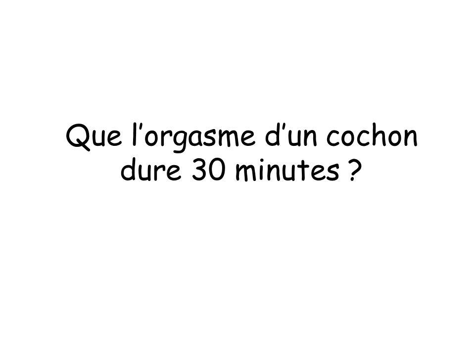 Que l'orgasme d'un cochon dure 30 minutes