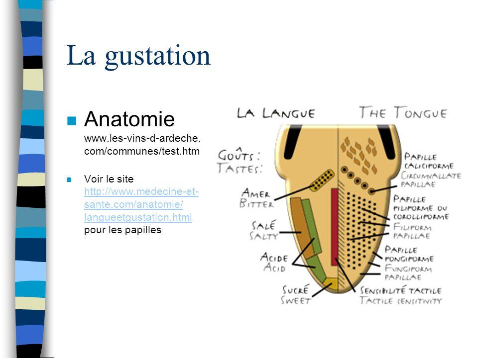 La gustation Anatomie www.les-vins-d-ardeche. com/communes/test.htm